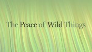 peace-wild-horizontal-001