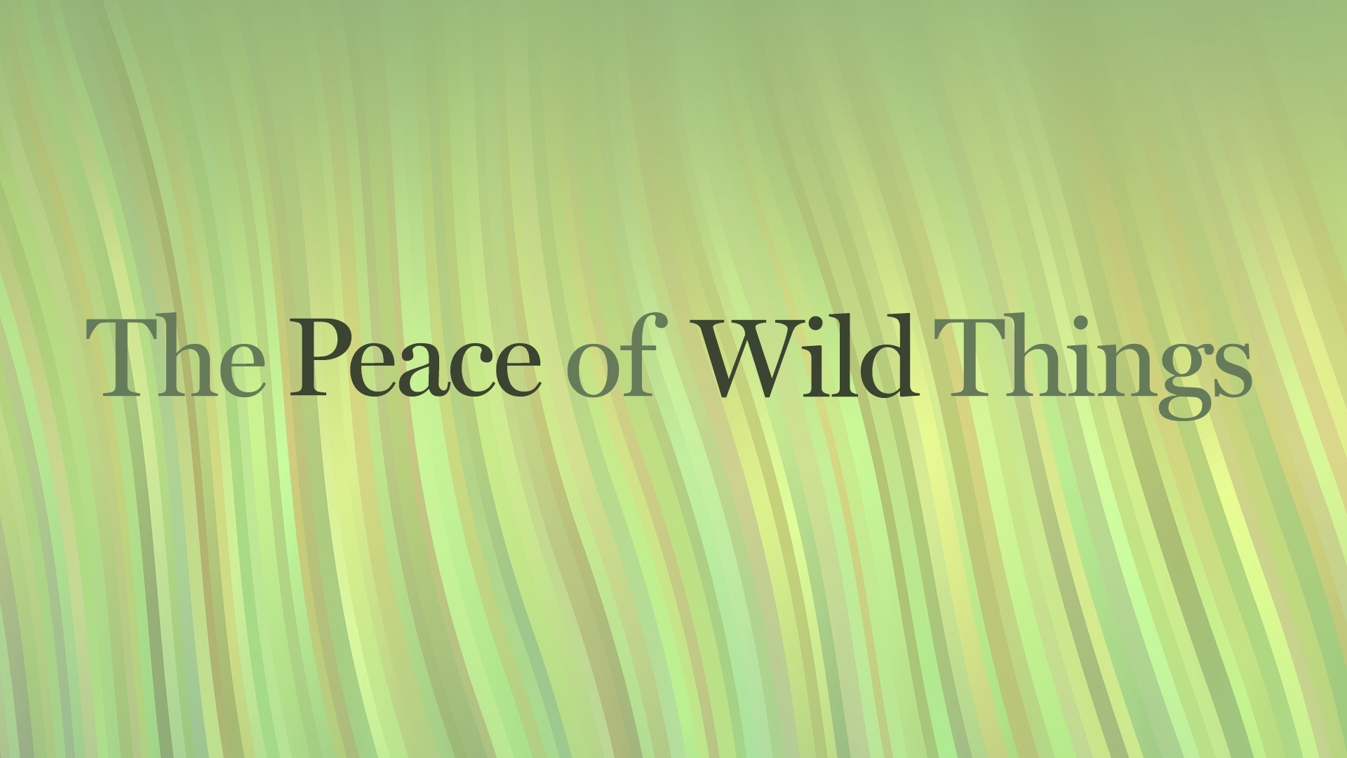 peace-wild-horizontal-001