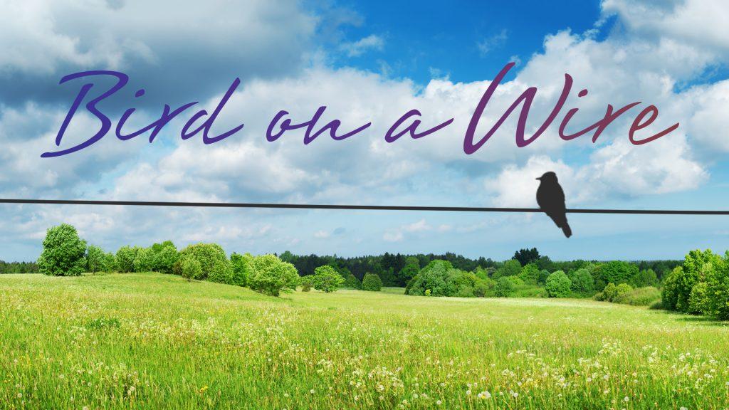 bird-on-a-wire-0001